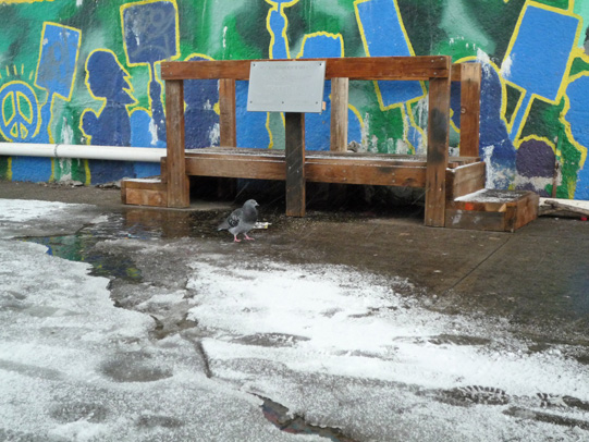 Astoria Scum River Bridge and lone pigeon