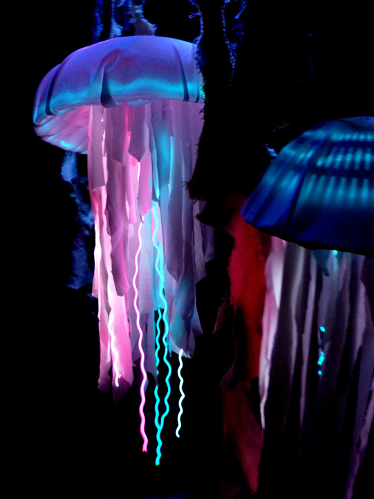 Mama and Papa Jellyfish