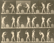 Animal Locomotion, plate 374 by Eadweard Muybridge