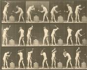 Animal Locomotion, plate 374 by Eadweard Muybridge